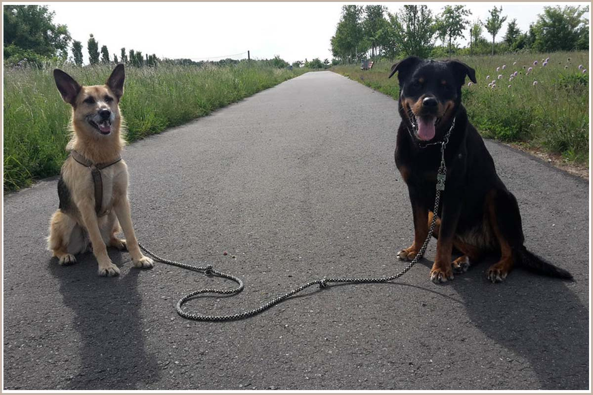 Lange, verstellbare Hundeleine von Ropes Upcycled