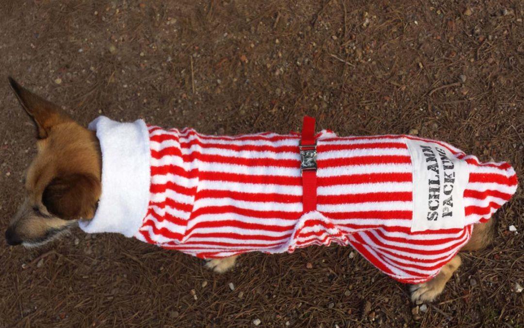 Hundebademantel – sinnvoll oder überflüssig? [Kooperation]