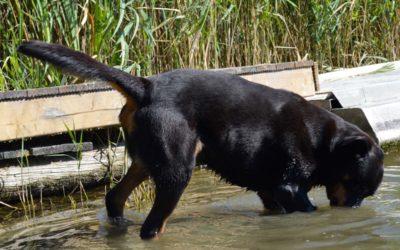 Fellpflege: Naturkosmetik tut dem Hund und den Menschenhänden gut