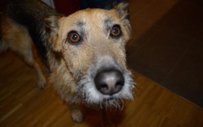 Das gemeine Sommerekzem – oder warum ich meine Hunde nicht mehr impfe