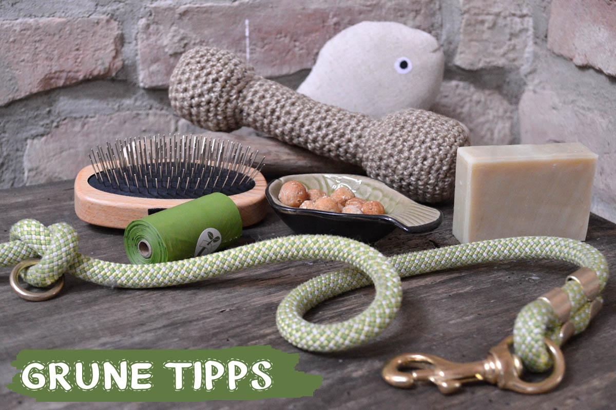 Grüne Tipps für nachhaltiges Hundeleben