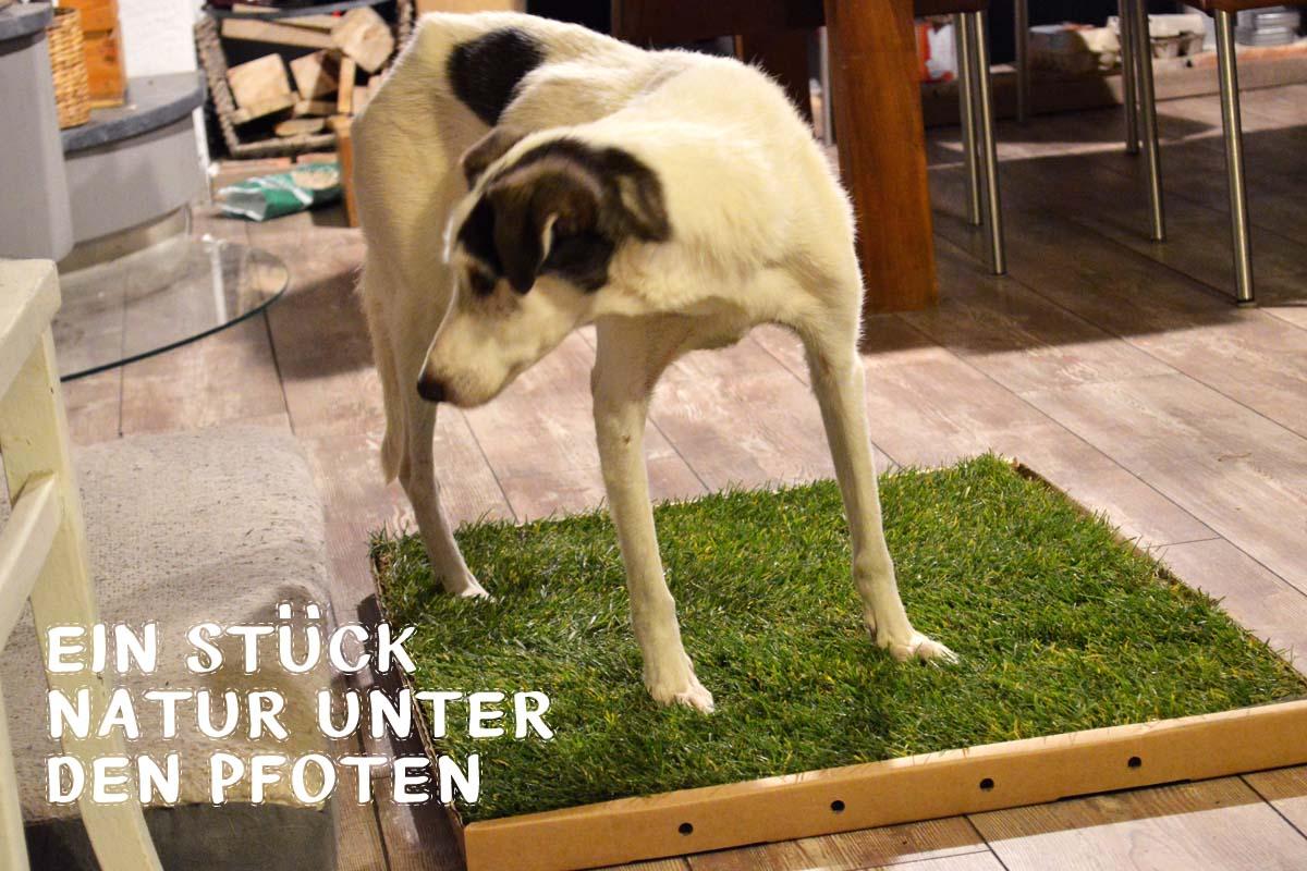 Hunde-WC für Zuhause