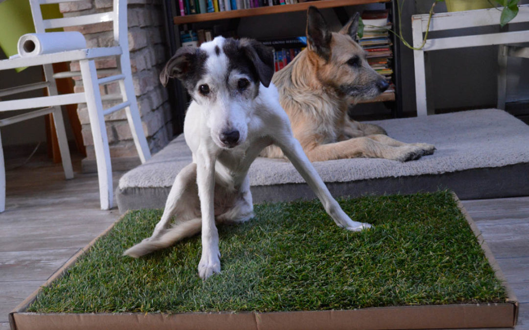 Carnilo: Das Hundeklo aus echtem Rasen im Test [Werbung]