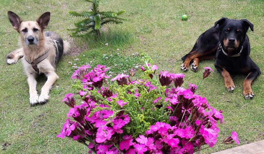 Impfundenbei Hunden: Risiken überwiegen