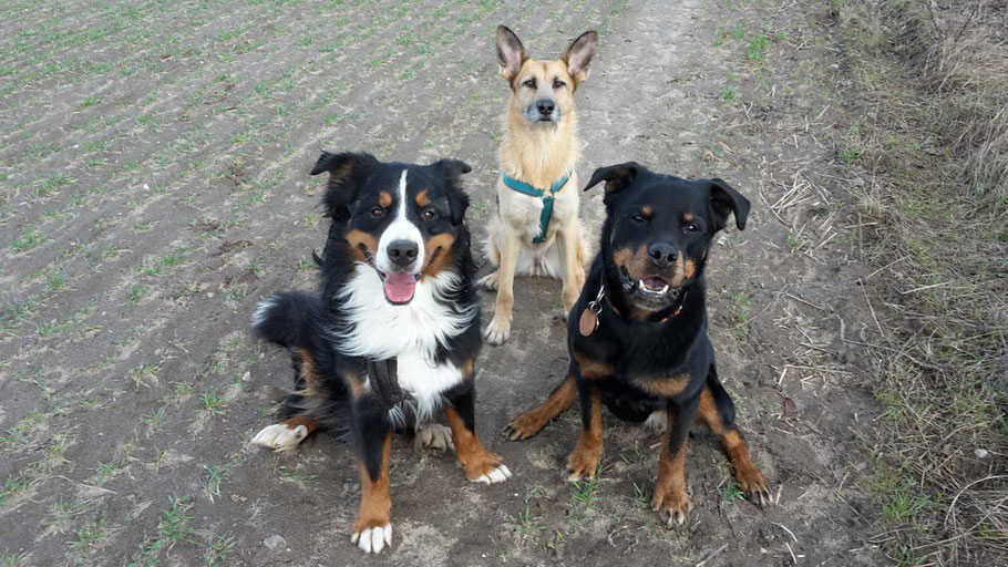 Impfunden bei Hunden - ja oder nein?