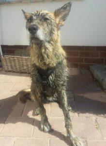 Hundegeschirr von Hundenerd nach einem Schlammbad