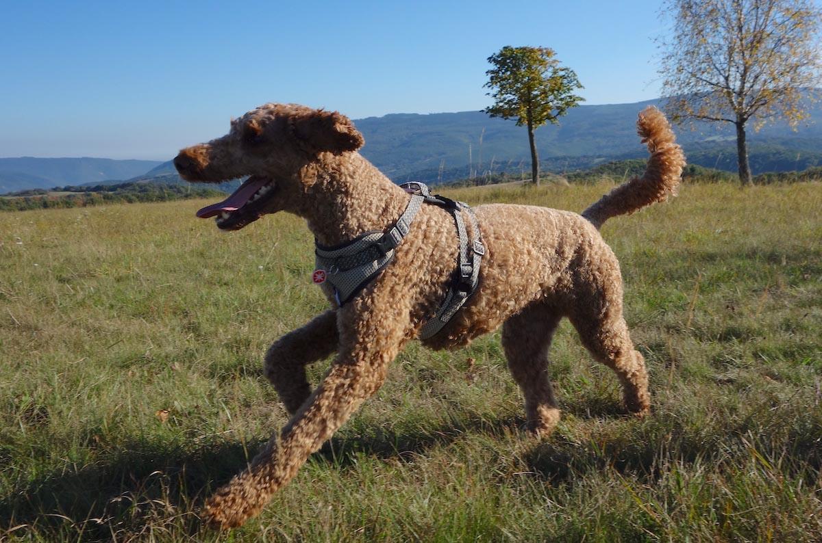 Hundenerd Geschirr - erstes Modell