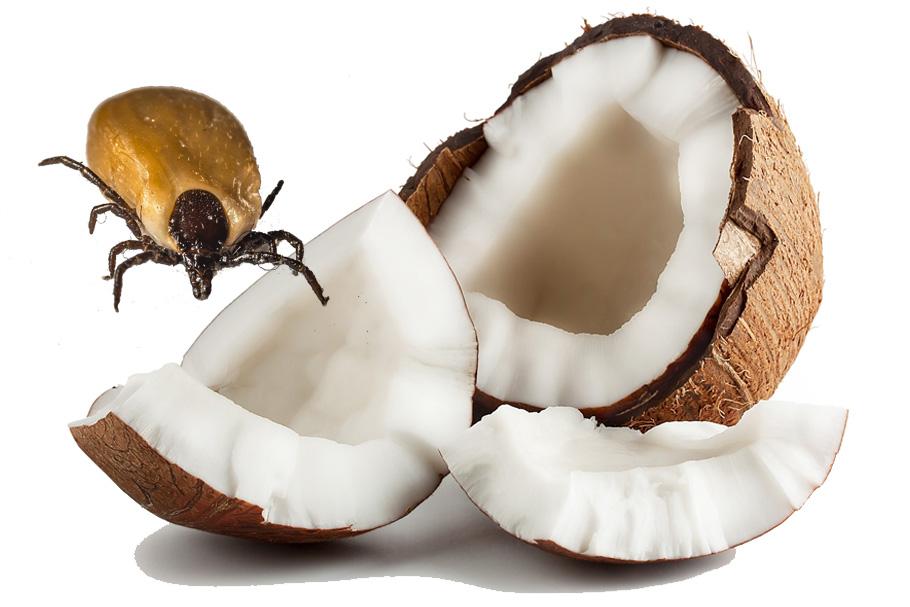 Mit Kokosöl gegen Zecken